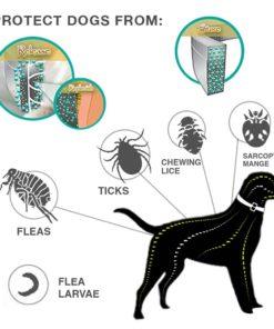 dog-flea-collar-4