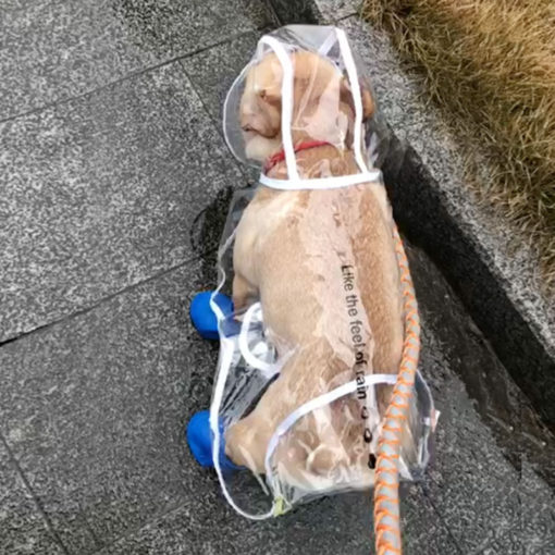 transparent-pet-raincoat-3